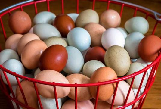 Chicken Eggs - Large - Free Range